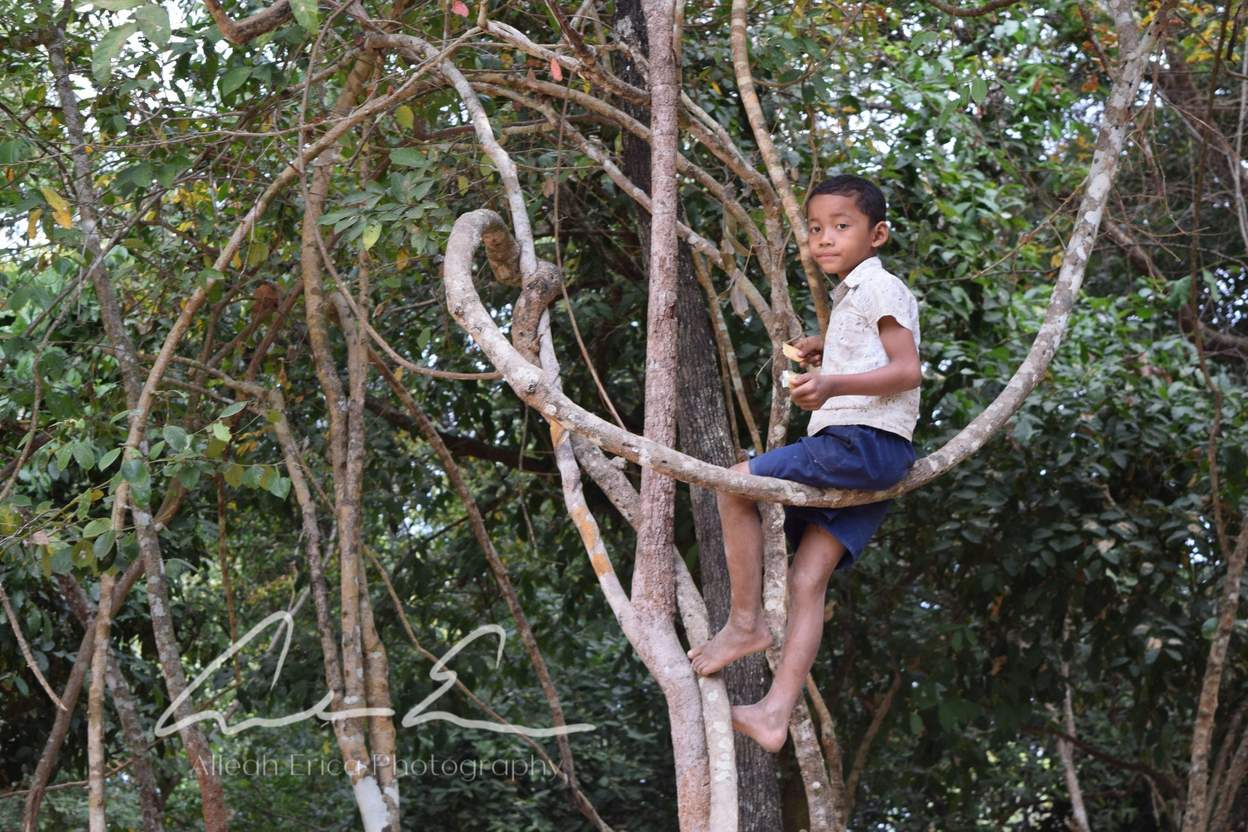 kid in swing branches in angkor wat siem reap cambodia